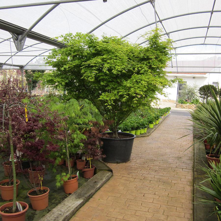 Plantas hoja perenne exterior finest sus tallos son for Plantas perennes exterior