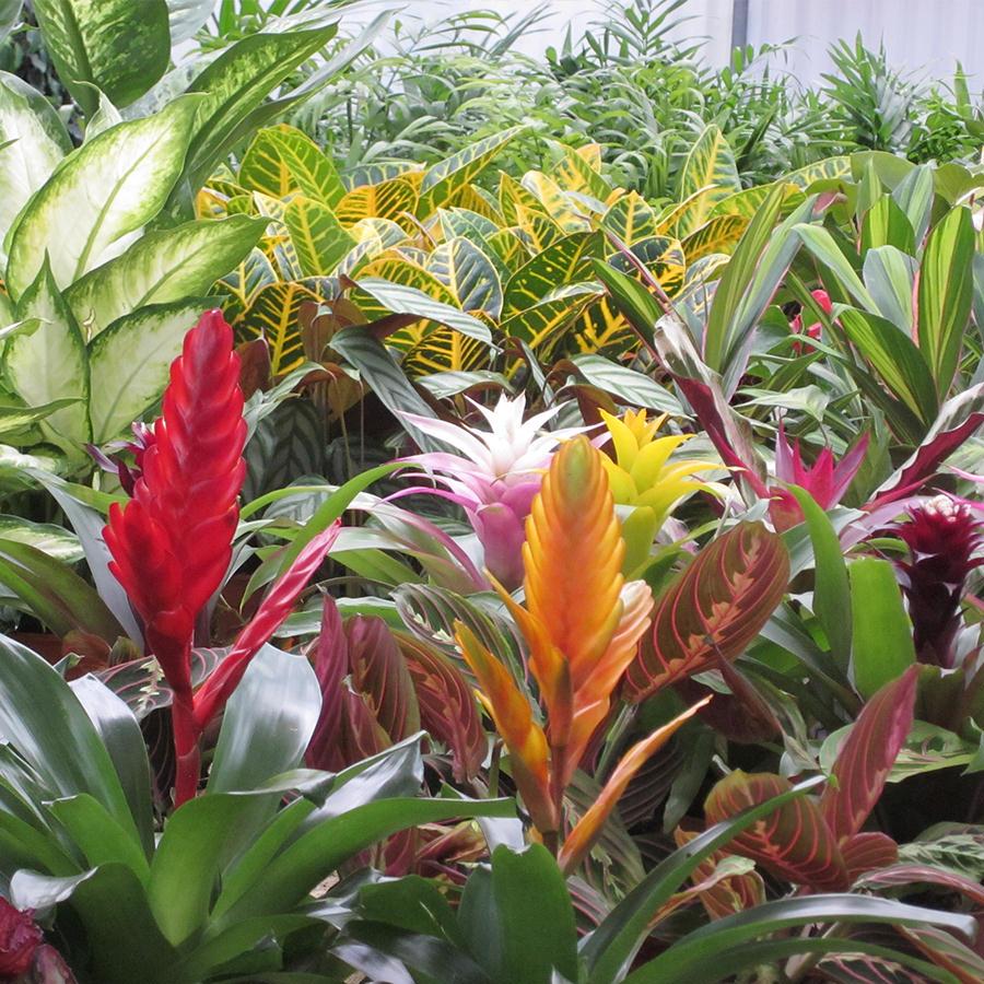 Viveros cadalso de los vidrios for Plantas de exterior